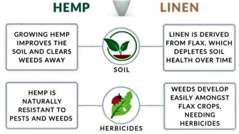 difference-between-hemp-and-linen