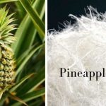 Pineapple-fiber-with-image